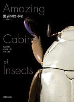 驚異の標本箱 -昆虫-