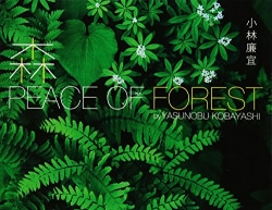 森 PEACE OF FOREST