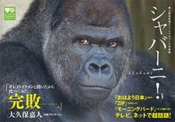 東山動植物園オフィシャルゴリラ写真集 シャバーニ!