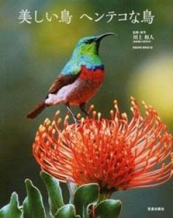 美しい鳥ヘンテコな鳥