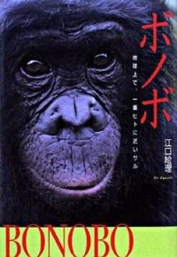 ボノボ : 地球上で、一番ヒトに近いサル