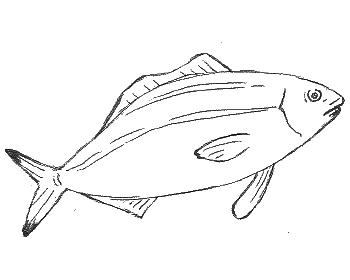 刺さっ 喉 な 痛み が よう 骨 魚の た