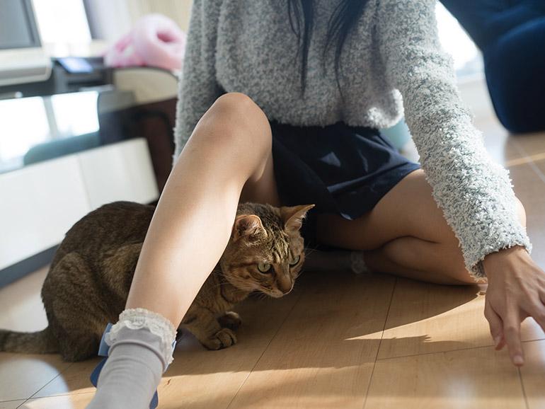 青山裕企『ネコとフトモモ』