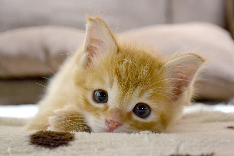 愛する猫からの「最後の贈りもの」 ペット専門葬儀場で聞いた猫の秘密 ...