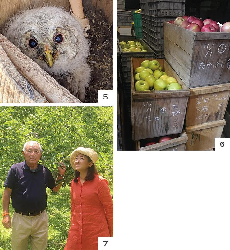 5 りんご園のネズミを退治するフクロウ、6 りんご王国のオーダーメイドジュース
