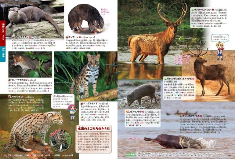 ニホンザルのしっぽが短い理由とは? 動物園でいろんな動物を見たらこの図鑑を...